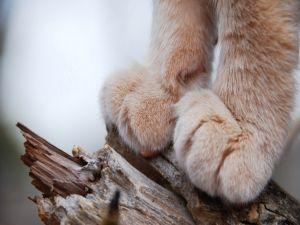 Feets of feline