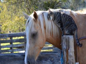 Friendship between a horse and a cat