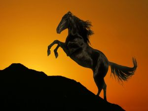A black horse over a background of golden tones