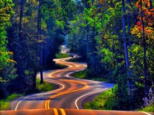 Sinuous curves by a forest road