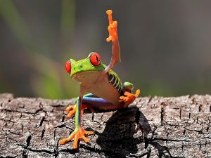 A little frog, raising his hand?