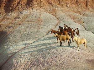 Wild horses on the rocks