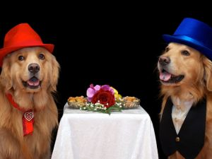 Two dogs dressed elegantly