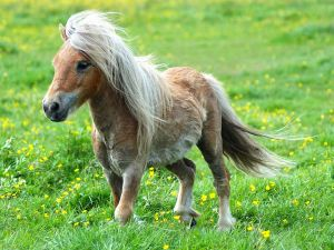 A small pony by the grasslands