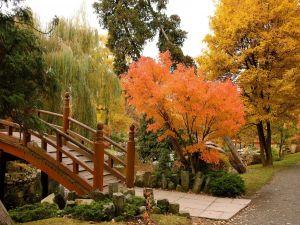 A Japanese Garden in Wroclaw, Poland