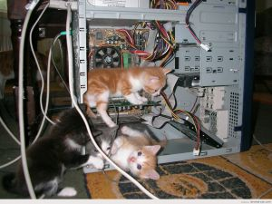 Kittens in the guts of a computer