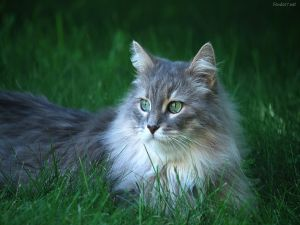 Beautiful green-eyed cat in the grass