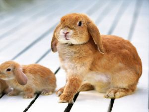 Rabbit with its young