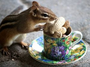 Squirrel eating peanuts from a cup
