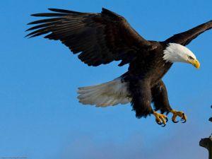 Eagle poised to take land