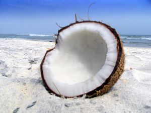 Coconut splitted in the sand of the beach