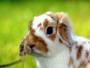 A cute bunny