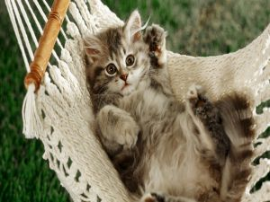 Kitten lying on a hammock