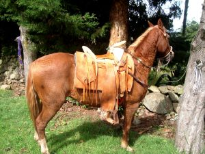 Chestnut horse saddled and ready to ride