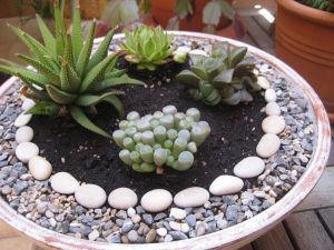 Decor with cactus and stones
