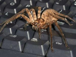 Tarantula on a keyboard