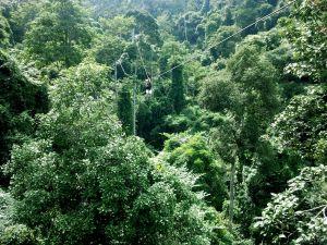 Zip line in rainforest