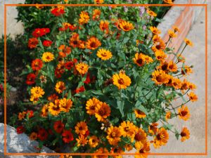 Flowerpot with orange flowers
