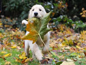 Puppy biting a leaf