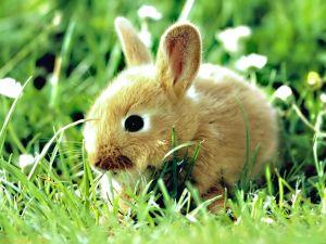 Little rabbit in the grass