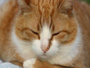 A sleepyhead cat