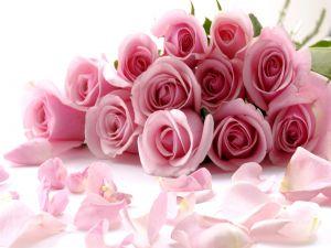 Petals and roses