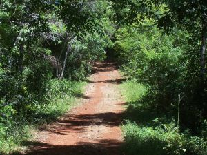 "Entry road to the ""Selva Misionera"" (Misiones, Argentina)"