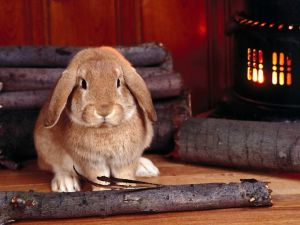 A rabbit next to the wood stove
