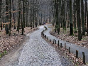 Forest near to Senftenhütte, Brandenburg, Germany