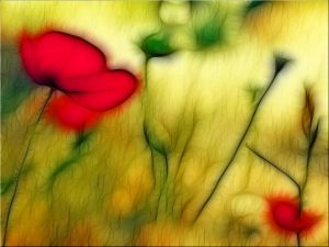 Blurred poppies
