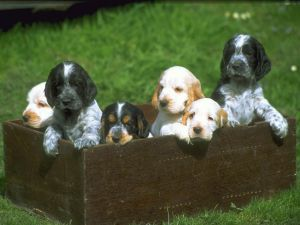 Puppies in a wooden crate