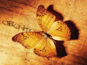 Butterfly Ubuntu