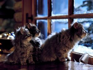 Kittens looking out the window
