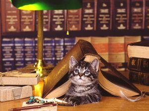 Cat under a book