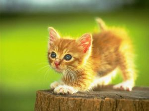 Kitten ready to jump