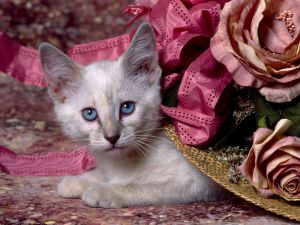 Kitten under an elegant hat