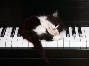 Kitten asleep on the keys of a piano