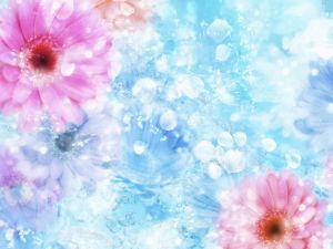 Pink gerberas over blue background