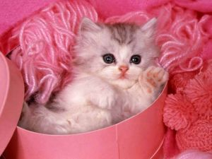 Kitten amongst pink woolen clews
