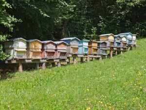 Beehives near La Balme-de-Thuy, Haute-Savoie, France