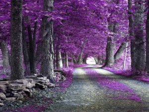 Path full of colored lilac leaves