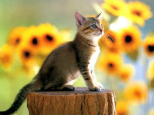 Kitten posing over a log
