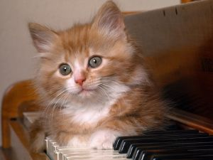 Kitten lying on a piano keyboard
