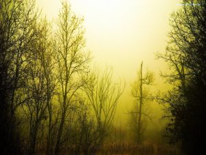 Mist among trees without leaves