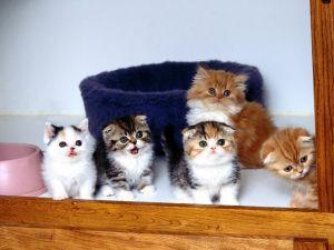 Kittens peering