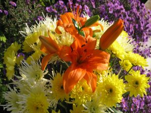 Yellow chrysanthemums and orange lilies