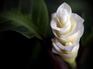 An elegant white flower