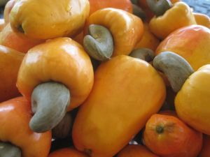Fruits and seeds of anacardium