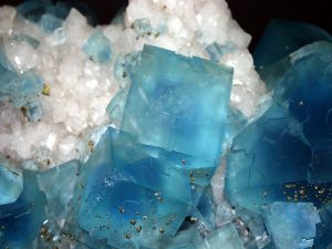 Fluorite crystals (blue) with pyrite (gold)