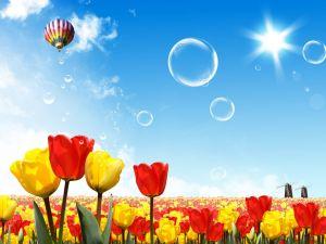 Balloon trip through Holland, land of tulips